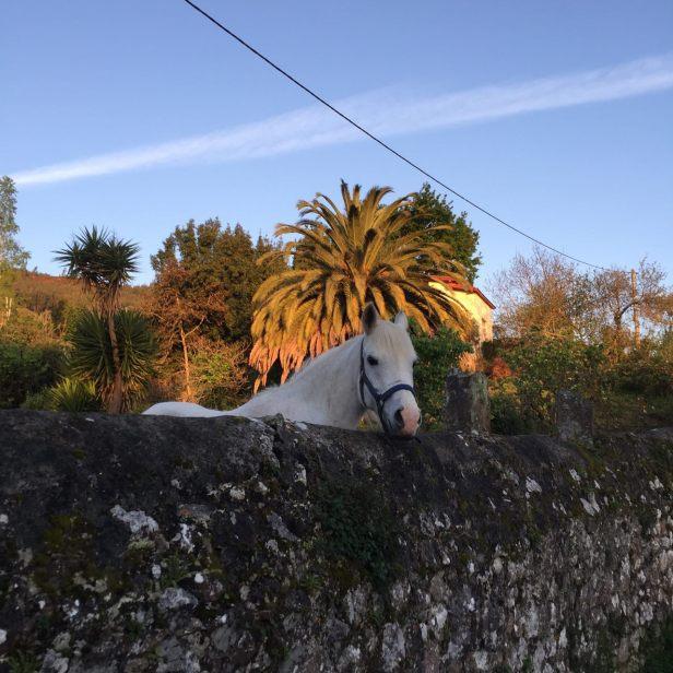 часть8_13_лошадь