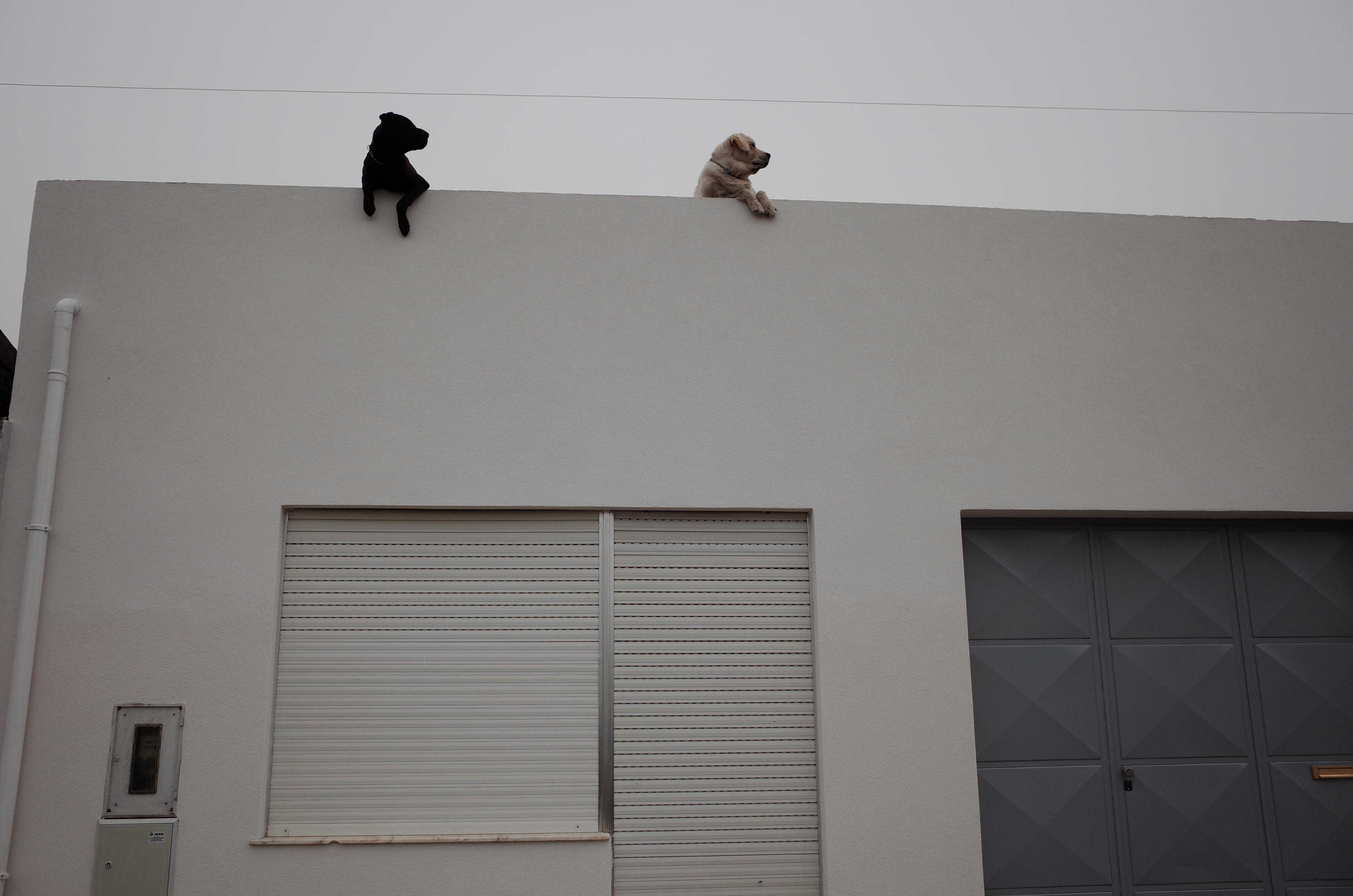 часть8_20_собаки на заборе.JPG